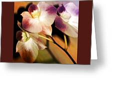 Hot Orchid Nights Greeting Card