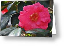 Hot Pink Camellia Greeting Card