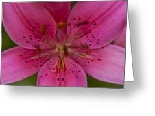 Hot Pink Close Up Greeting Card