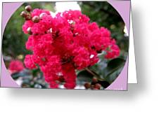 Hot Pink Crepe Myrtle Blossoms Greeting Card