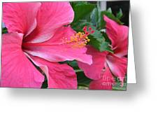 Hot Pink Hibiscus 2 Greeting Card