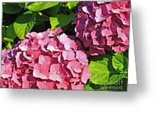 Hot Pink Hydrangea Greeting Card
