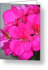 Hot Pink In February Greeting Card