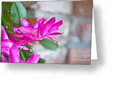 Hot Pink Christmas Cactus Flower Art Prints Greeting Card