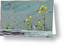 Hot Spring Flowers Greeting Card