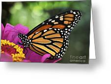 Hot Windy Day Greeting Card
