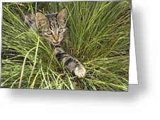 House Cat Hunting In Grass Germany Greeting Card