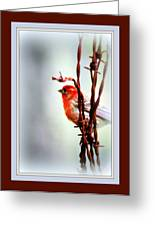 House Finch - Finch 2241-004 Greeting Card