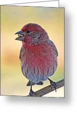 House Finch II Greeting Card