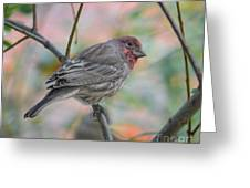 House Finch In Autumn Greeting Card