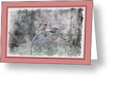 House Finch - Kiss Me Greeting Card