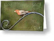 House Finch On Guard II Greeting Card