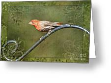 House Finch On Guard IIi Greeting Card
