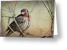House Finch Two Greeting Card
