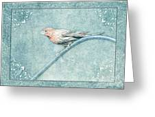 House Finch With Colored Sketch Effect Greeting Card