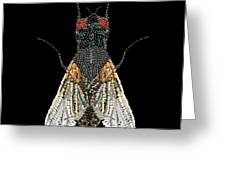 House Fly Bedazzled Greeting Card