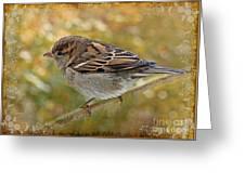 House Sparrow II Greeting Card