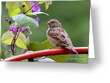 House Sparrow On A Wheel Greeting Card