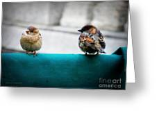 House Sparrows Greeting Card
