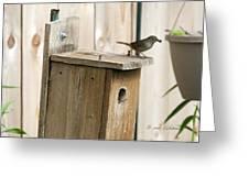 House Wren Feeding Time Greeting Card