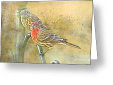 Housefinch Pair With Texture Greeting Card