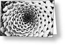 Houseleek Pattern Monochrome Greeting Card