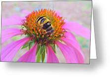 Hover Fly On Purple Coneflower Greeting Card