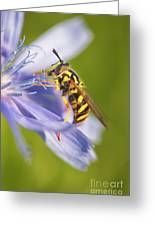 Hover Fly Greeting Card by Todd Bielby