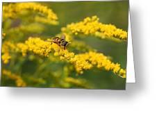 Hoverfly Feeding Greeting Card