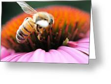 Hovering Bee Greeting Card
