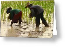 How We May Enjoy Rice Greeting Card