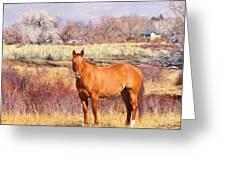 Howdy Greeting Card
