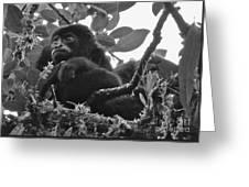 Howler Monkey's Greeting Card