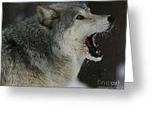 Howling Gray Wolf  Greeting Card