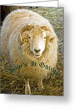 Hows It Going Old English Hunter Green Greeting Card