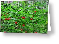 Huckleberry Bush Greeting Card