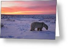 Hudson Bay Landscape Greeting Card