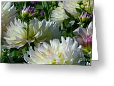 Hues Of Softness Dahlia Greeting Card