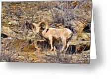 Huge Bighorn Greeting Card
