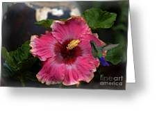 Huge Mexican Desire Hibiscus With Hummingbird Greeting Card