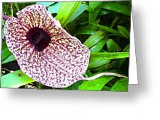 Huge Orchid Greeting Card