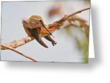 Huimmingbird 5 Greeting Card