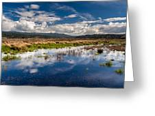Humboldt Marshes In Spring Greeting Card