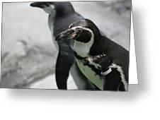 Humboldt Penguins Greeting Card