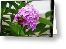Humingbird Moth Greeting Card