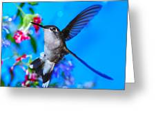 Hummer And Flowers On Acrylic Greeting Card