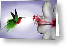 Hummer Splash In Flight Greeting Card by Diana Shively