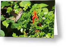 Hummer Greeting Card