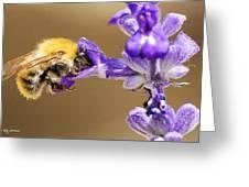 Humming Bee  Greeting Card