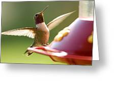 Humming Bird 2 Greeting Card